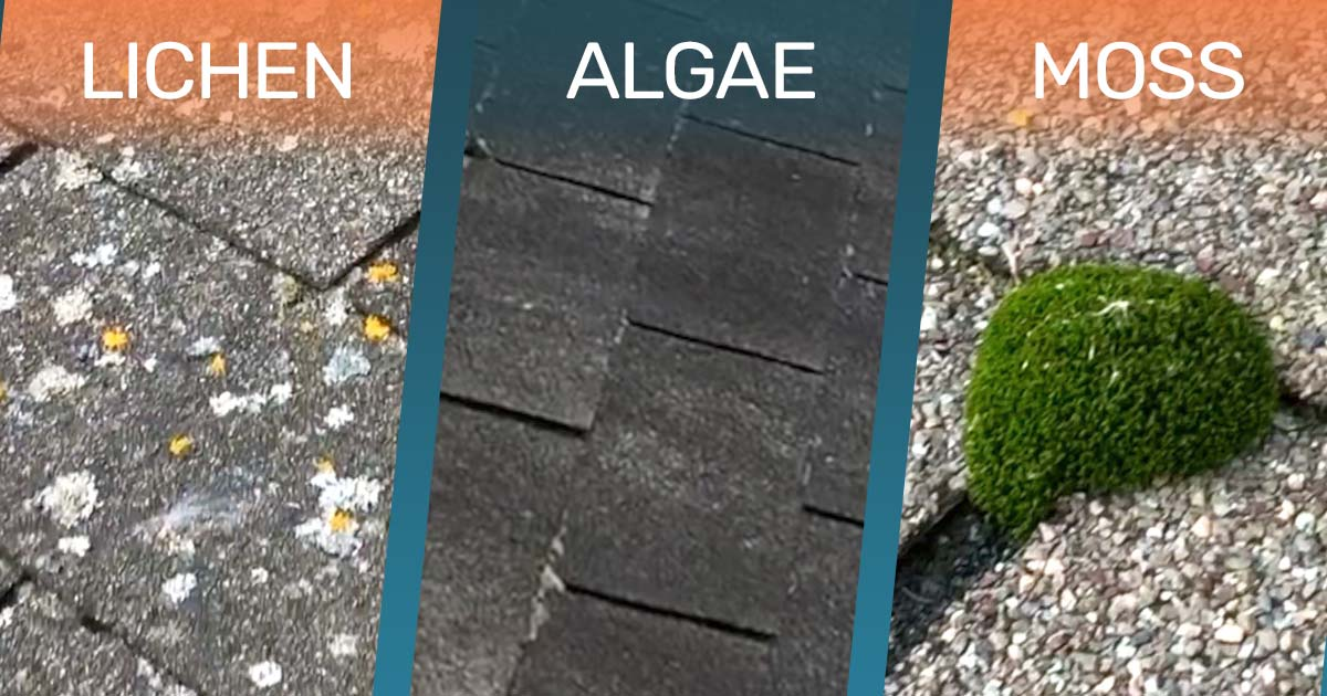 algae moss lichen roof damage